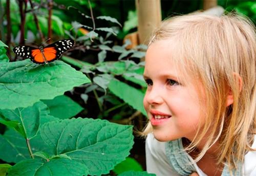 Le jardin des papillons knokke petites sorties la mer for Le jardin knokke