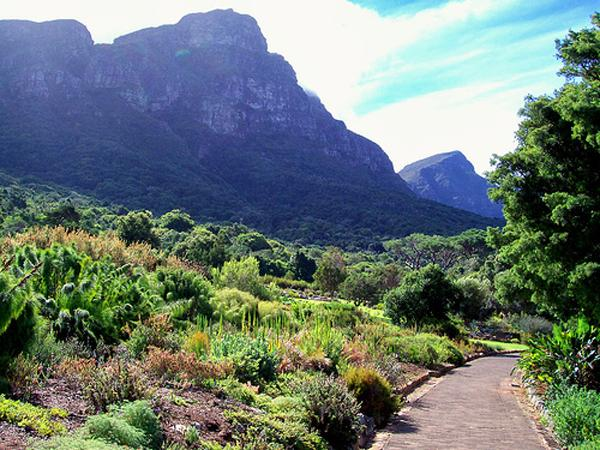 les jardins botanique kirstenbosch le cap afrique du sud. Black Bedroom Furniture Sets. Home Design Ideas