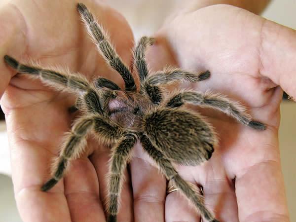 10 infos pour ne plus avoir peur des araign es 10 infos pour ne plus avoir peur des araign es. Black Bedroom Furniture Sets. Home Design Ideas