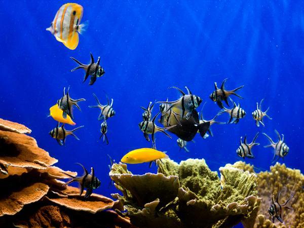 d 233 couvrez l aquarium de bruxelles 10 excursions avec vos petits enfants