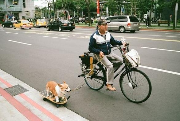 Even de hond uitlaten mannen zullen altijd mannen for Trasportino cane scooter