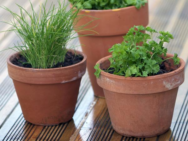 Les herbes aromatiques composer son joli potager for Composer son jardin
