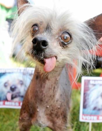 lelijkste honden ever