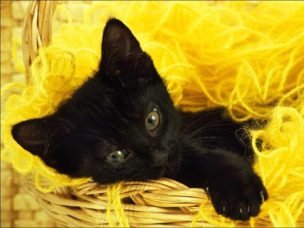 3 la propret du chaton 10 tapes pour duquer votre chaton. Black Bedroom Furniture Sets. Home Design Ideas