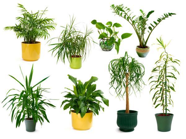 Dix plantes qui font du bien votre int rieur dix for Plante interieur facile