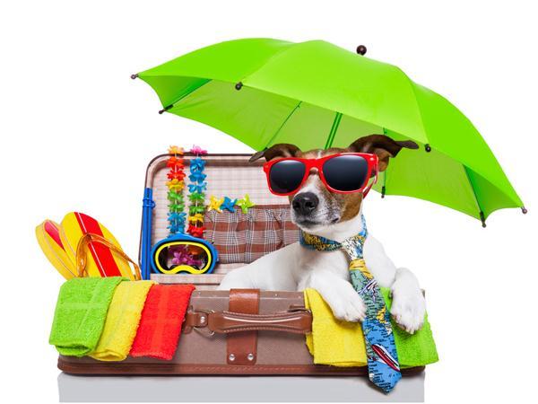671148465ee779 Je pars en vacances et je mets dans ma valise… - 15 jeux pour les ...
