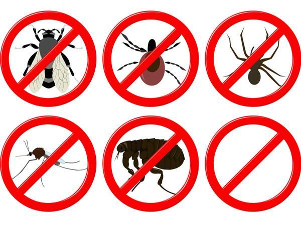 10 produits naturels contre les insectes 10 produits. Black Bedroom Furniture Sets. Home Design Ideas