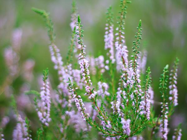 10 plantes aux couleurs automnales