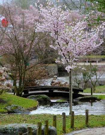 le jardin japonais hasselt les plus beaux parcs pour