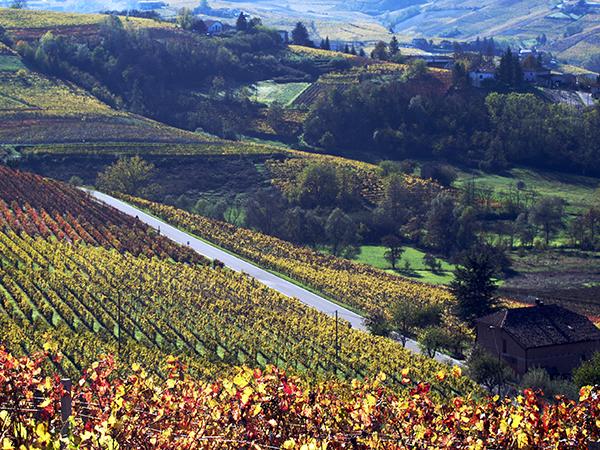 Des vins typiques