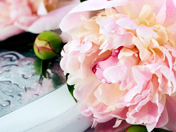 rouge pivoine les meilleurs fleuristes de bruxelles. Black Bedroom Furniture Sets. Home Design Ideas