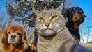 Les selfies d'animaux les plus drôles !