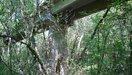 Un monorail de trop
