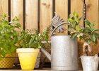 Jardin d'aromates : comment s'y prendre ?