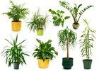 Tien onverwoestbare kamerplanten