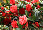 Tien winterharde planten