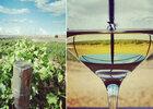 Sur la route des vins de Rueda