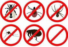 10 middeltjes om insecten buiten te houden