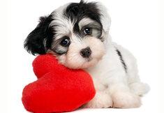 Werelddierendag: Tips voor het opvoeden van je hond