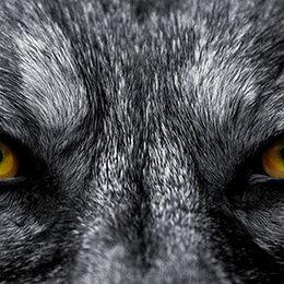 Les animaux les plus dangereux du monde !