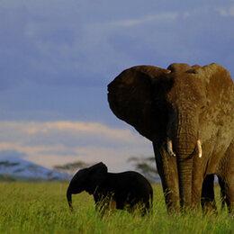 6. L'éléphant