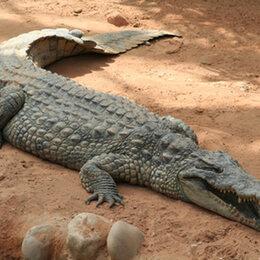 5. Le crocodile