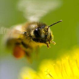 Alarmerende bijensterfte