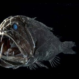 Monstres des fonds marins