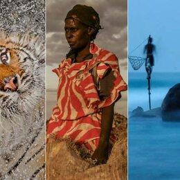 """Les plus belles photos """"nature"""" de 2012"""