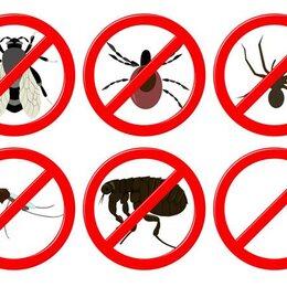 10 produits naturels contre les insectes - Produit naturel contre les mouches ...