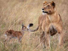 Quand les animaux se comportent de façon étrange