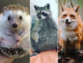 Deze dieren zijn echte sterren op Instagram