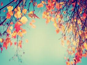 Waar op vakantie gaan in de herfst?