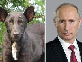 Ces animaux ressemblent étrangement à des célébrités
