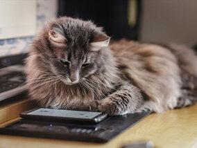 Hoe het leven van katten veranderd is onder invloed van technologie