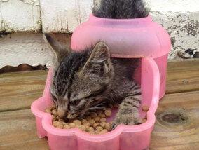 Logica volgens katten