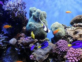 La faune marine réduite de moitié en 40 ans !