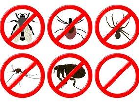10 produits naturels contre les insectes
