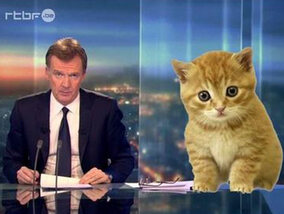 Cats of Brussels, l'humour belge désamorce le terrorisme