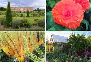 Les jolies floralies du Hampton Court Palace