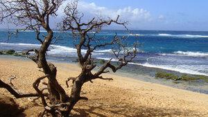 Les plages les plus chères du monde