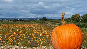 Ierland, de bakermat van Halloween
