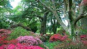 's Werelds mooiste tuinen