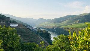 La vallée du Douro et son porto