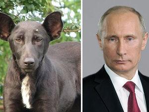 Dubbelgangers: dieren en beroemdheden met een griezelige gelijkenis