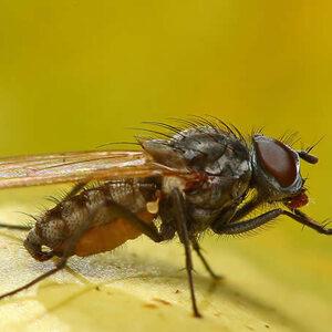 les petits animaux r agissent plus vite pourquoi est il si difficile de tuer une mouche. Black Bedroom Furniture Sets. Home Design Ideas