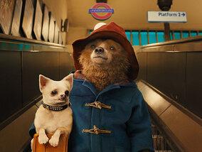 Paddington : un ourson hilarant