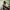 Tame Impala - Pukkelpop 2019
