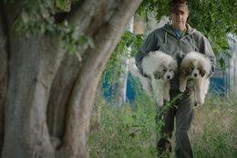 De keuze van Jan Verheyen: The Biggest Little Farm