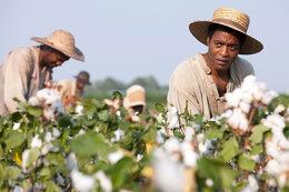 """Le coin des cinéphiles : """"12 years a slave"""""""
